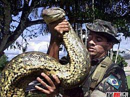 人类发现的世界上最大的蛇有多大?世界上最大的蛇有97米