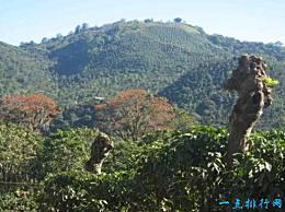 世界十大咖啡生产国巴西名列榜首