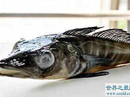 世界上最耐冻的鱼 它如此耐冻以至于我们无法想象