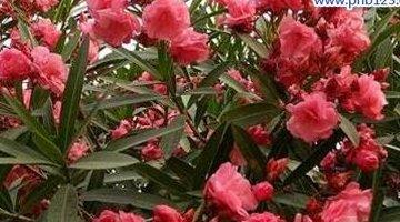 世界十大有毒植物 最后三种是最常见的 请小心!