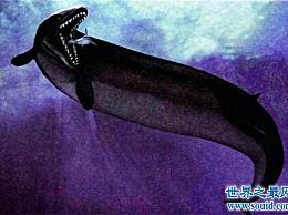古蜥蜴鲸现在已经灭绝了 它们是生活在5000万年前的生物