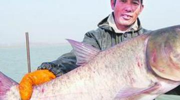 中国四大鱼:草鱼暖胃降血压 而鲢鱼饲养最好
