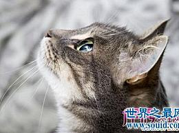 你如何看待宠物安乐死对宠物的生活、感情和家庭成员的影响