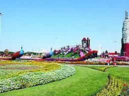 世界上最大的花园4500万朵花创造了一个沙漠花园