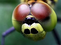 世界上眼睛最多的动物 蜻蜓有56 000只眼睛(捕捉昆虫)