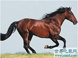 世界上最快的马比汽车还快