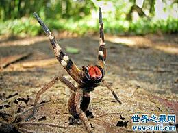 世界十大最毒的蜘蛛被第一只毒蜘蛛咬后会变得虚弱