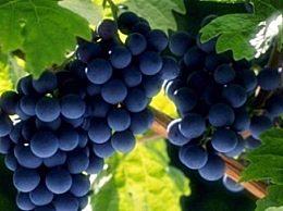 什么是酸葡萄效应?如果你不能吃葡萄 你可以说葡萄酸降低了目标值