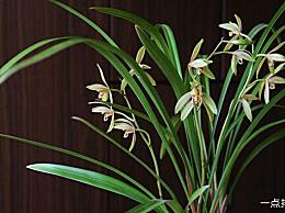 世界十大最美丽的兰花是什么