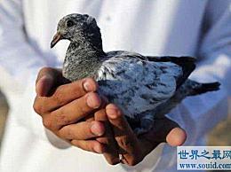 世界上最昂贵的宠物 迪拜最富有的人养鹰来炫耀他们的财富