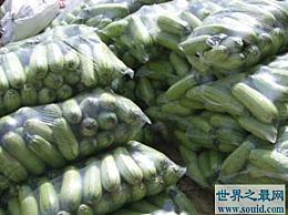 世界上最耐旱的种子植物 沙娜蔬菜甜瓜可以在无水条件下发芽8年