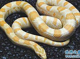 世界十大最美丽的蛇 探索冷血背后的美丽面孔!
