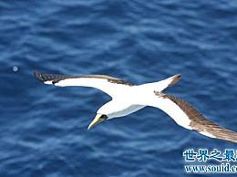 世界上最快的鸟比高铁还快!