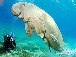 世界上16种即将灭绝的动物 这在一生中是绝不会出现的