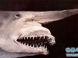 世界十大最可怕的鲨鱼 遇到他们时要小心