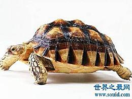 世界上寿命最长的动物 他们不仅长寿 而且可爱