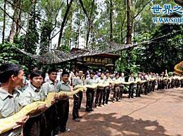 世界上最大的蛇有97米 这当然是假的(只有14.85米)