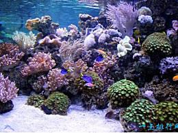 珊瑚海 世界上最大的海洋 几乎是中国的一半大小