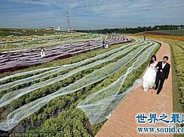 世界上最长的婚纱 第一件是中国成都的4100米婚纱!
