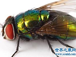 为什么苍蝇总是搓手?事实证明 这不是一个动画镜头
