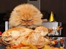 世界十大著名的宠物猫 波斯猫垫底