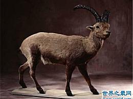 近几年灭绝的十种珍稀动物 人类的傲慢最终导致了它们的灭绝