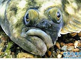世界上最奇怪的鱼 比目鱼的眼睛长在头的一侧