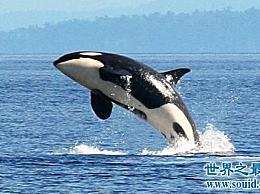 生活在南极洲的八种动物 除了企鹅 还有这些生物