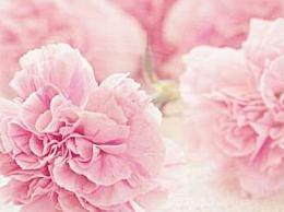 母亲节送什么样的花适合母亲节送的花名册