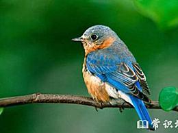 十大最忠诚鸟类排行榜