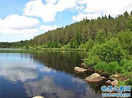 英国最大的森林名单 你听说过多少