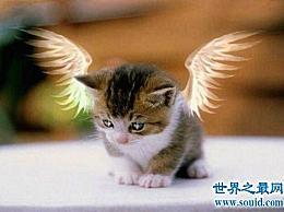 飞猫目睹了这一事件 并介绍了一只会飞的有翼猫