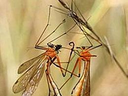 十大有趣昆虫排行榜
