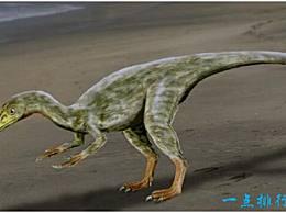 世界上最小的恐龙不到40厘米长