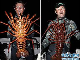 巨型龙虾重24磅 已经95岁了 它可以长到12磅 基本上可以吃了