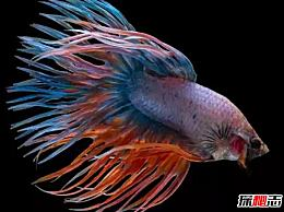 什么是最美丽的鱼?盘点世界上10种最美丽的鱼(附图片)