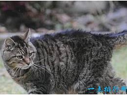 世界上寿命最长的猫已经活了39年 相当于人类的172岁