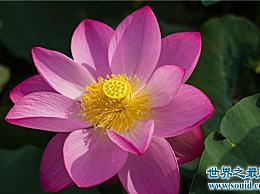 世界上最纯净的花 它从泥土中出来 不会凋谢
