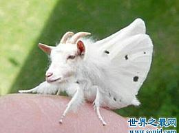 世界上有许多看起来很新奇的奇怪动物