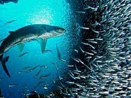 了解鲶鱼效应企业更需要鲶鱼人才