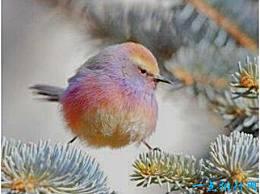 世界上最美丽的鸟 有小而圆的花和五颜六色的羽毛