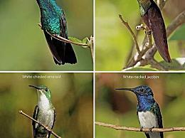 蜂鸟 世界上最小的鸟 有很高的价值 鸟类不应该承担