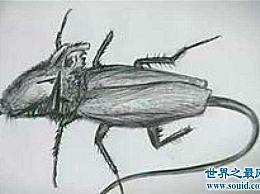 蟑螂老鼠成熟后会飞 这是蟑螂和老鼠的变种