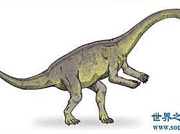 最早的哺乳动物 摩根牙 有2.05亿年的历史!