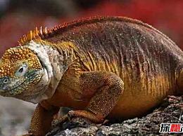 哪些动物颜色鲜艳?世界上10种最多彩的动物