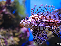 地球上十大可怕的海洋生物 每一种都能轻易地夺走人的生命