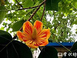 中国十大珍稀植物