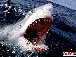 地球是最大的食肉动物 古代食人鲨吃人(21米/103吨)