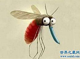 蚊子害怕什么?夏季驱蚊小贴士