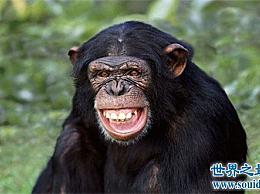 世界上智商最高的10种动物 甚至猪都在名单上